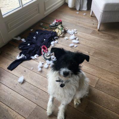 consultation-comportementale-destruction-solitude-chien-comportementaliste-canin