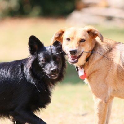 education-canine-sociabilisation-alsace-vosges-du-nord